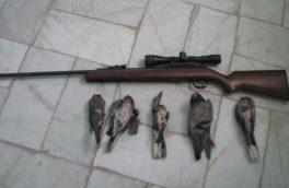 شکارچی کبوتران وحشی در سرپل ذهاب شناسایی شد