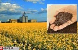 کلزا کاران استان در سال زراعی گذشته بسته حمایتی دریافت کردند