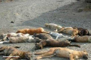 سگکُشی در مناطق زلزله زده کرمانشاه