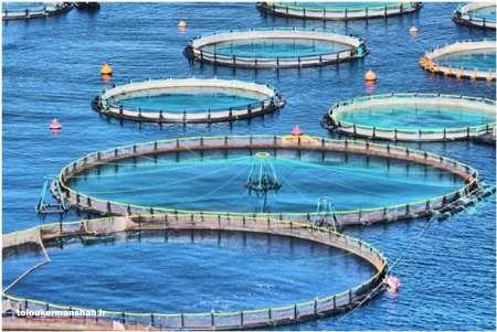 ۶۶۰تن ماهی در قفس در استان پرورش یافته است