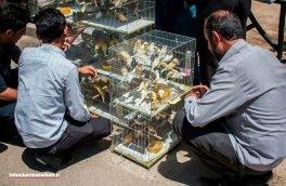 کشف ۴۵۰ قناری قاچاق در روانسر