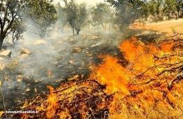 چهار هکتار از جنگل های ناودار گیلانغرب در آتش سوخت