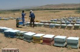 از ۱۴ مهر ماه؛ آغاز سرشماری کلنیهای مزارع زنبور عسل در استان کرمانشاه