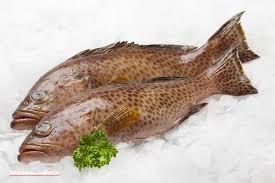 سرانه مصرف ماهی در میان مردم کرمانشاه ۹ کیلوگرم است