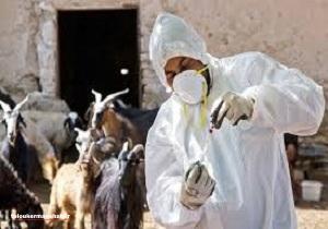 در هیچ یک از دامداریهای صنعتی استان بیماری تب مالت دیده نشده است