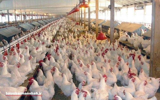 تاکنون هیچ کانون آنفلوآنزای پرندگان در کرمانشاه مشاهده نشده است