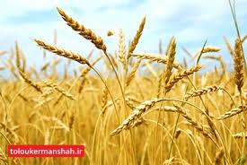 اقساط سررسید ۷۱۰۶ کشاورز کرمانشاهی امهال شد