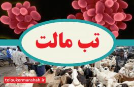 """بیماری """"تب مالت"""" در کمین انسان و دام / کردستان و کرمانشاه رتبه های اول و دوم"""