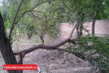 سیل تولیدات باغی استان کرمانشاه را ۱۵ درصد کاهش داد