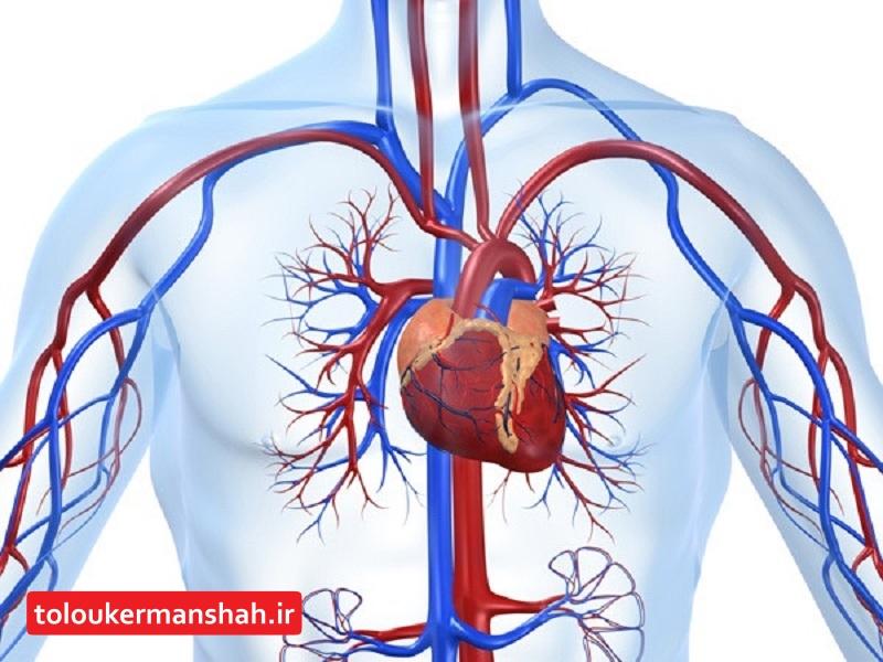 ۴۵ درصد مرگ و میرهای استان ناشی از بیماریهای قلبی و عروقی است