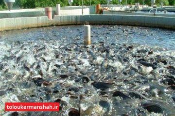 شیلات کرمانشاه رتبه اول تولید ماهیان گرمابی در استان های غیرساحلی کشور را دارد/ خوراک ماهی و سایر عوامل، دلیل افزایش قیمت ماهی