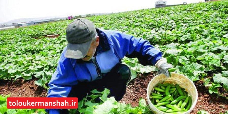 باید آثار تحقیقات کشاورزی را در مزرعه ببینیم/ برنامه ۳ ساله توسعه بخش کشاورزی استان در دست تهیه است