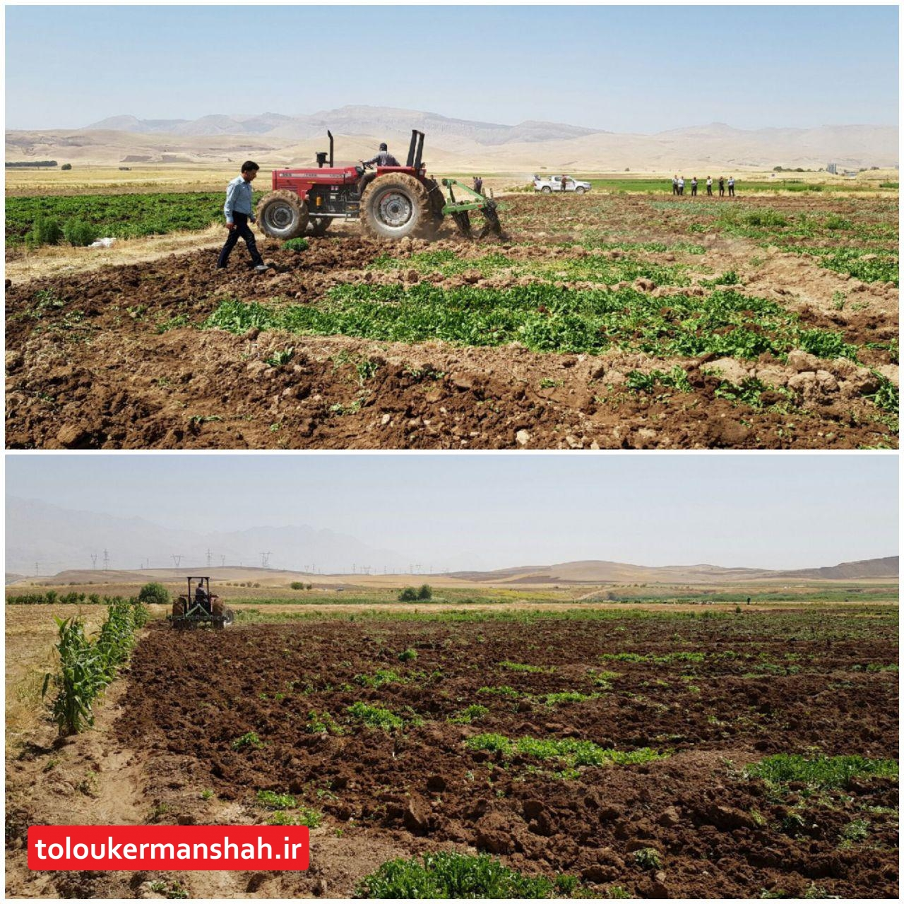 تخریب حدود پنج هکتار سبزی کاری غیر مجاز در روستای قمشه درودفرامان