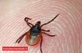 ۲ نفر در کرمانشاه به بیماری تب کریمه کنگو مبتلا شدند