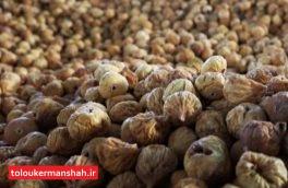 ۲۰ تن انجیر از ریجاب کرمانشاه به فرانسه صادر میشود