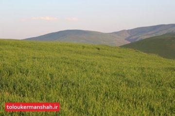 احیاء ۳۵۰۰هکتار از مراتع استان کرمانشاه