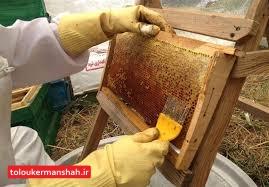 امسال تولید عسل کرمانشاه به ۴۵۰۰ تن میرسد