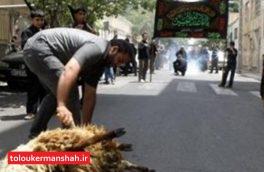 فعالیت ۳۲ گروه ثابت و سیار دامپزشکی کرمانشاه در روز تاسوعا و عاشورا