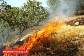 بخشی از ارتفاعات شهرستان دالاهو دچار آتشسوزی شد