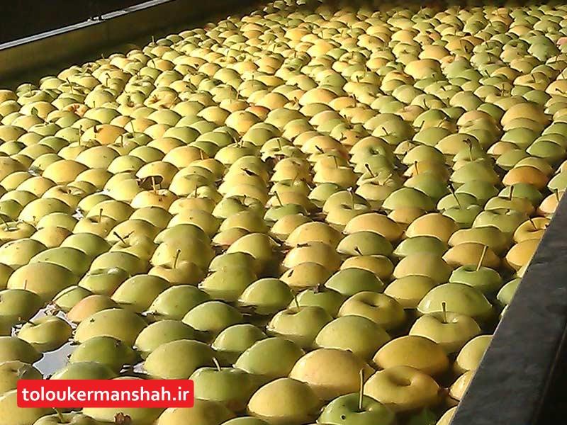 """پیشبینی تولید ۱۱۰۰ تن """"سیب درختی"""" در سنقروکلیایی"""