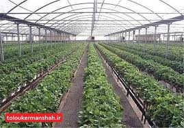 اعطای تسهیلات ویژه برای ایجاد گلخانه در کرمانشاه /تسهیل صدور مجوز