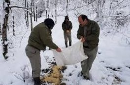 دانهپاشی دستی برای پرندگان وحشی ممنوع