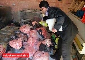 امحای ۱۵۹ تن فرآورده خام دامی ناسالم در کرمانشاه