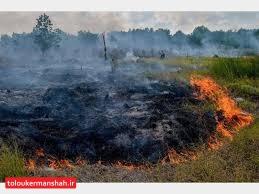 """۶هکتار از مزارع کشاورزی """"سرپل ذهاب"""" در آتش سوخت"""