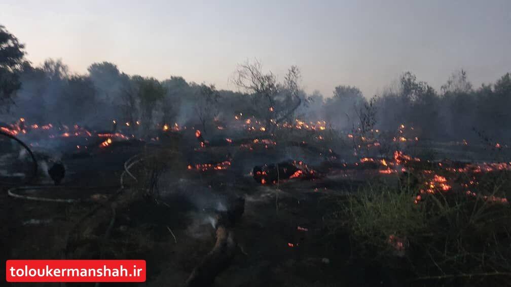 """آتشسوزی """"بوزین و مرهخیل"""" کرمانشاه در ۲ نقطه اطفا شده است"""