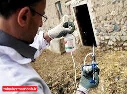 """دامهای کرمانشاه علیه """"بروسلوز"""" واکسینه میشوند"""