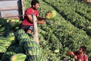 """ردپای دلالها در اختلاف قیمت محصولات کشاورزی """"از مزرعه تا سفره"""""""