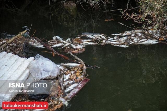 پمپهای غیرمجاز کشاورزی دلیل مرگ ۲۰۰۰ ماهی در تالاب میرعزیزی کوزران