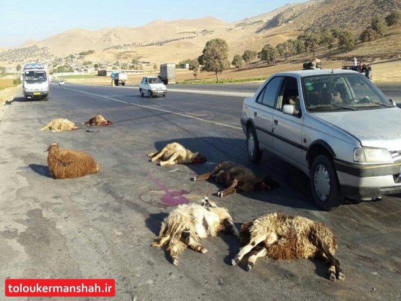 تلف شدن ۱۰ راس گوسفند بر اثر برخورد با خودرو در بیستون