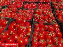 برگشت نیمی از کامیونهای گوجهفرنگی از مرزهای استان کرمانشاه / متولیان تجارت پاسخگوی افزایش قیمت داخل و خرابی بار در مرزها باشند