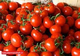 تجارت گوجه به مرز عراق دلیل گرانی و نوسان قیمت در بازار داخلی/امروزدر کرمانشاه گوجه کیلویی ۲هزار تومان‼️