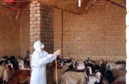 مردم کرمانشاه مراقب تب کنگو باشند