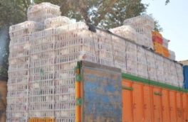 سه تن و ۵۰۰ کیلوگرم مرغ زنده قاچاق در کرمانشاه کشف شد