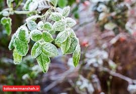 کاهش محسوس دمای کرمانشاه/هشدار خسارت به محصولات کشاورزی