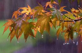 رگبار باران و رعد وبرق آسمان کرمانشاه را فرا میگیرد/ اسلام آباد و کنگاور سردترین نقاط استان