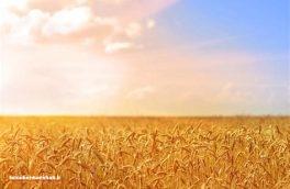 بخش کشاورزی ظرفیتی سرشار برای خودباوری و تولید ملّی / مجتمع بینظیر تولید تکنیکال سُموم کشاورزی در استان کرمانشاه