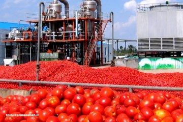 عبدالله مدیرعامل روژین تاک:بعید است رب گوجه دیگر از حدود ۱۴ هزار تومان ارزانتر شود.