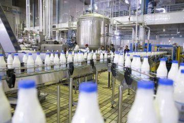 هیچ آلودگی در شیر صنایع لبنی کرمانشاه وجود ندارد