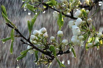 کشاورزان کرمانشاهی برای بارندگی خوب منتظر «اردیبهشت» باشند