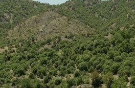 ۲۵۵نقطه بحرانی و نیمه بحرانیحریق در جنگلهای کرمانشاه