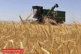 راه برای هرگونه قاچاق گندم در استان بسته شود