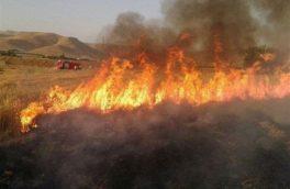 آتش در زمین های کشاورزی دالاهو