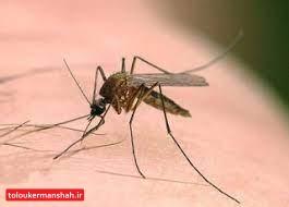 شیوع بیماریهای سالک و حیوان گزیدگی در فصل گرما