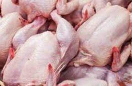 تشدید نظارت ها بر تولید و توزیع مرغ از مرغداری تا کشتارگاه /ادارات جهادکشاورزی و صمت در اجرای مصوبات ستاد تنظیم بازار اهتمام جدی داشته باشند