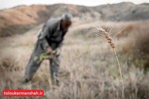 امهال وامهای کشاورزان خسارت دیده از خشکسالی در کرمانشاه