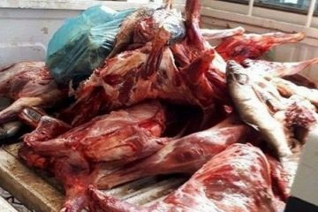 امحاء ۲ هزار و ۸۰۰ کیلوگرم گوشت فاسد در کرمانشاه
